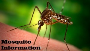 Mosquito Information